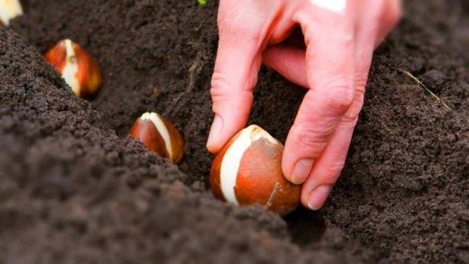 Приятные хлопоты истинных садоводов в январе