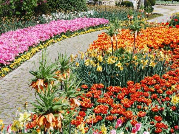 Подбор растений для цветников и клумб