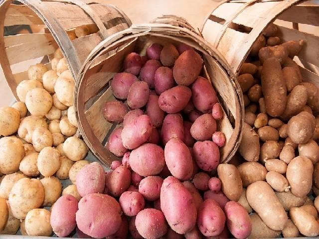 Можно ли сажать картофель в июле и как правильно это сделать