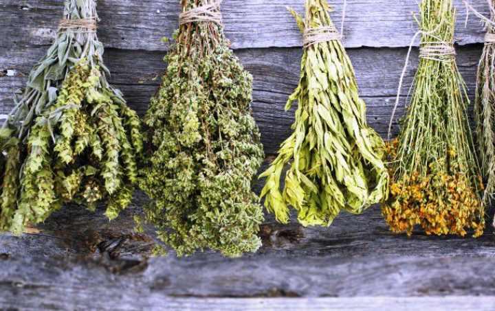 От чего помогает трава иссоп, ее лечебные свойства