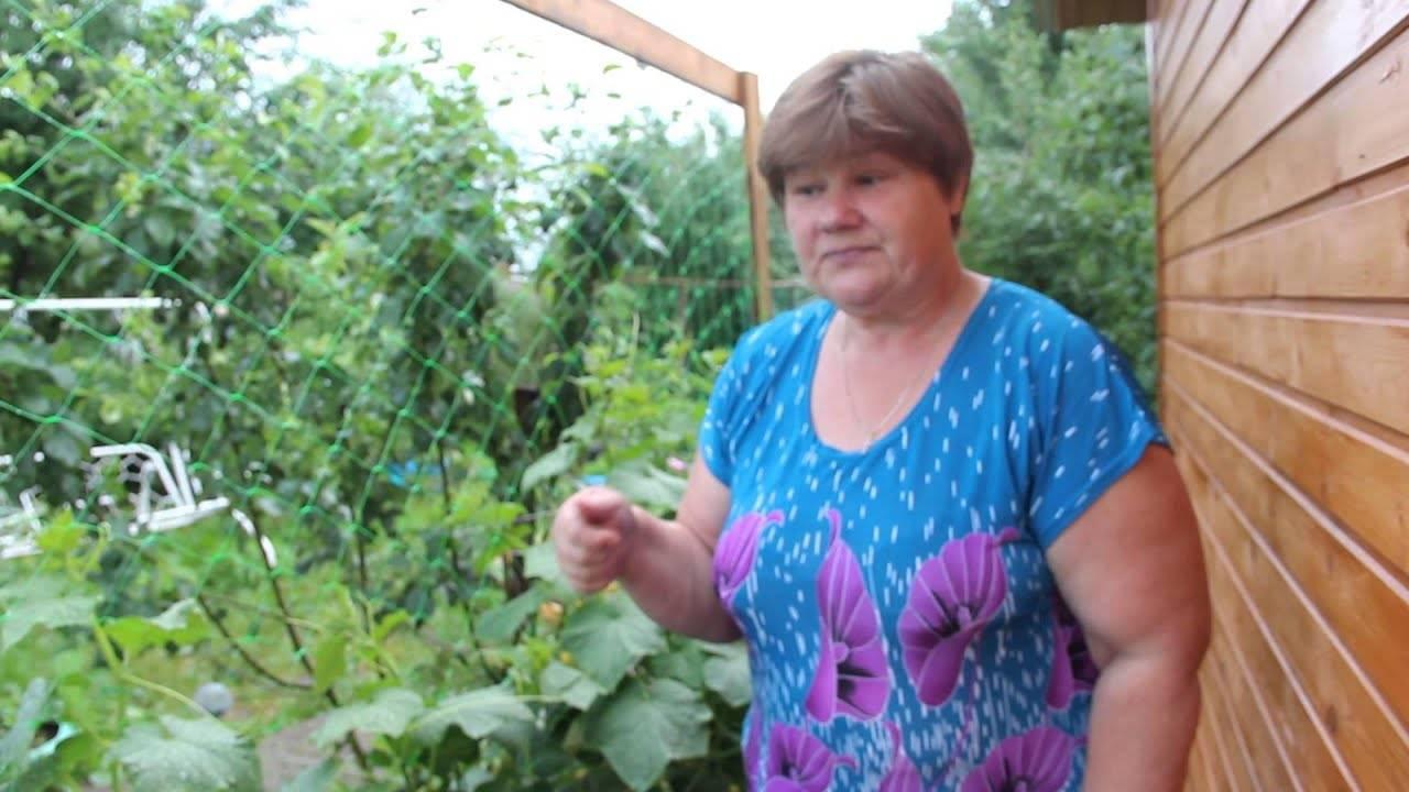 Огурцы в мешках: выращивание пошагово