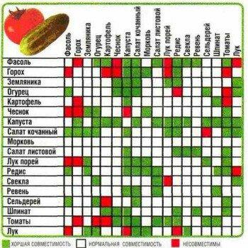 Таблица совместимости растений в огороде и саду, примеры правильных посадок на грядках овощей и других культур