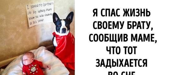 Вольер для собаки: варианты стильных и красивых загородок для собак (100 фото)