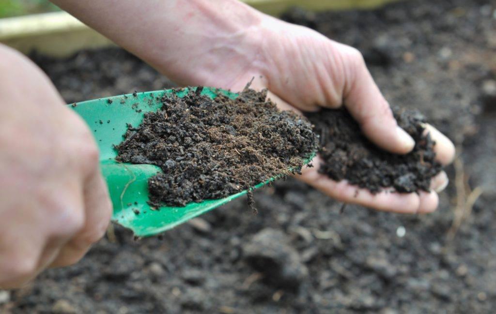 Изготовление плодородной смеси с использованием торфа. торф в земледелии: характеристики, полезные свойства, способы и правила использования каким растениям полезен торф