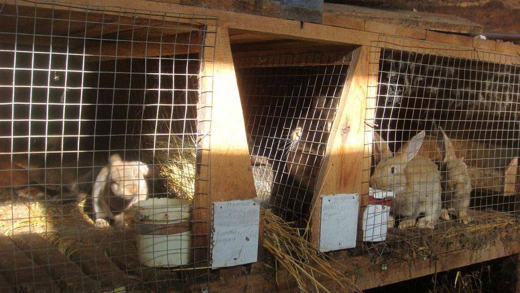 Применение препарата «стоп-кокцид» для кроликов