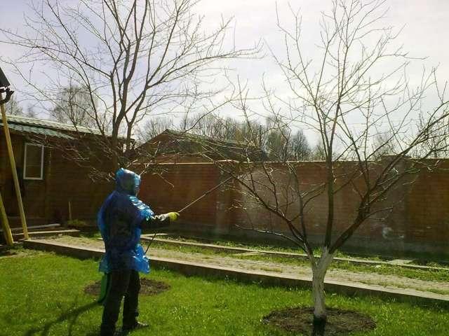 Подкормка груши весной: когда и чем нужно подкармливать