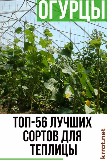 Самоопыляемые сорта огурцов для открытого грунта