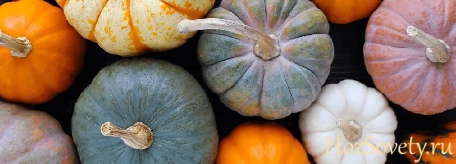 Хранение тыквы: секреты свежести оранжевой королевы