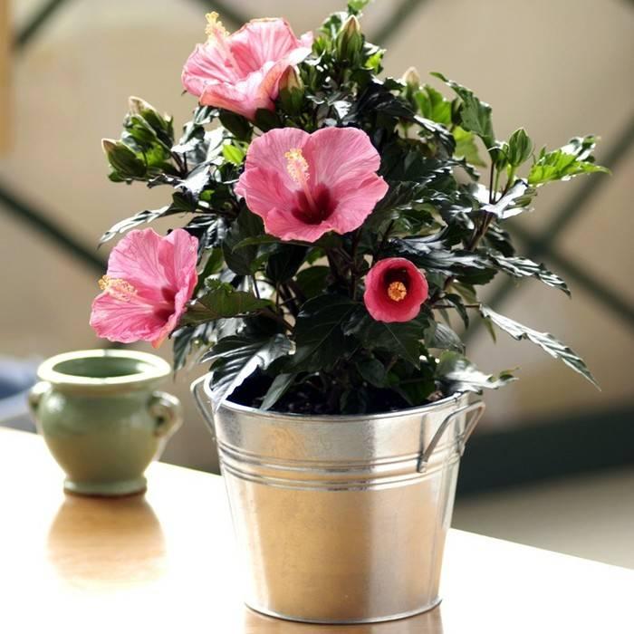 Как подобрать растения для детской комнаты