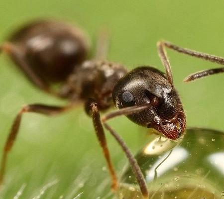 Как избавиться от садовых муравьев: не дадим им шанса уничтожить урожай