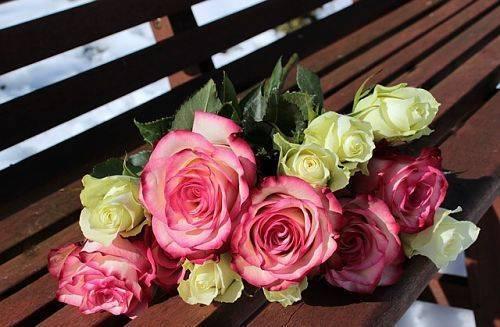 Укореняем розу из букета: три популярных способа
