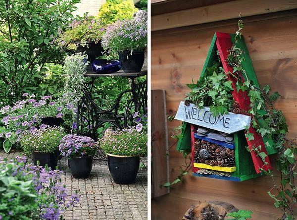 Самые полезные комнатные растения для выращивания в домашних условиях