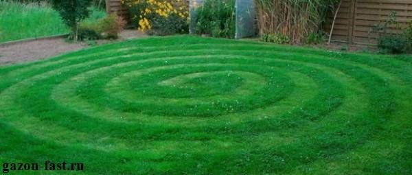 Как сделать газон на заросшем участке: 4 совета и 6 шагов