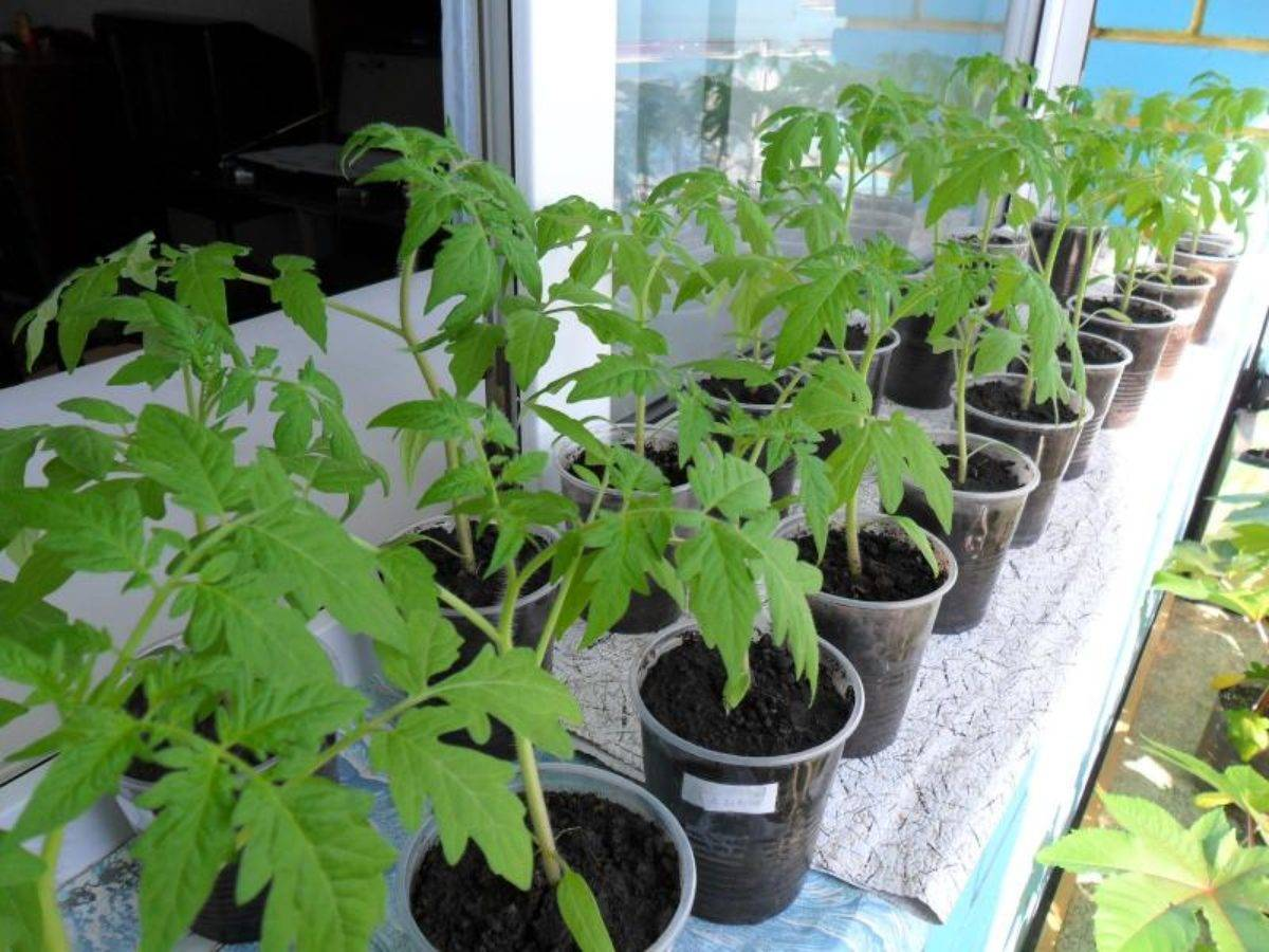 Современный подход и бабушкины методы как избавиться от улиток в огороде