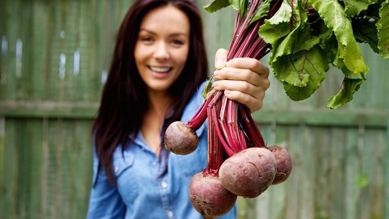 Лекарство и вкусный продукт с грядки - свекла. польза и вред корнеплода для человека