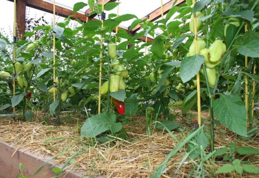 Севооборот в теплице — как правильно проводить посадки и чередовать растения, видео