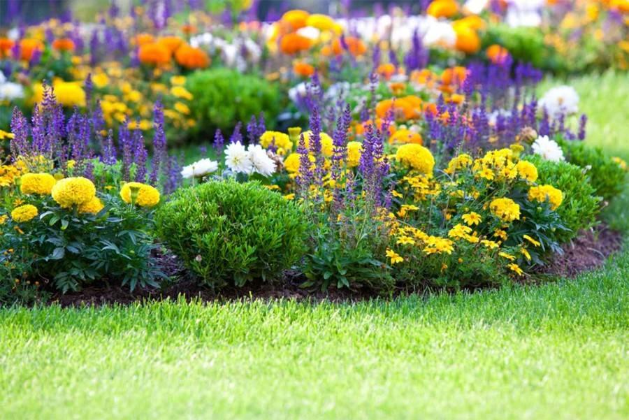 Портулак в цветнике: посадка, выращивание, уход, использование. сорта портулака (фото) и особенности размножения