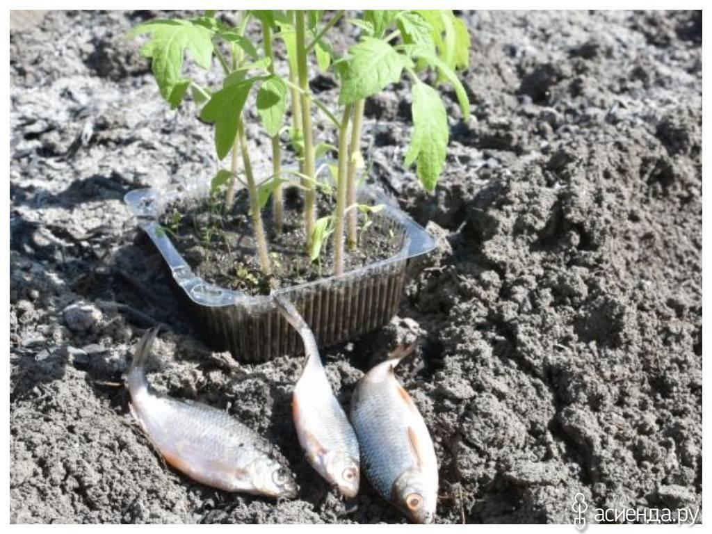 Основные виды органических удобрений для плодородия садовой почвы