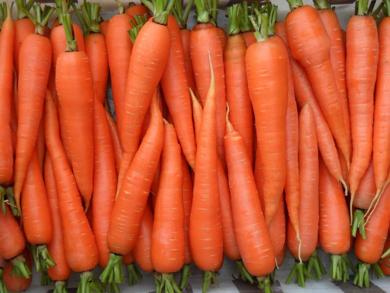 Чем лучше подкармливать морковь