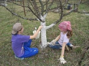 Как подготовить огород к новому сезону