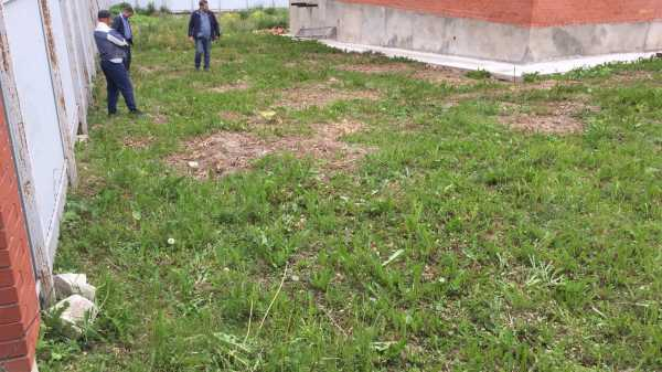 Возможна ли посадка газона, в осенний период?