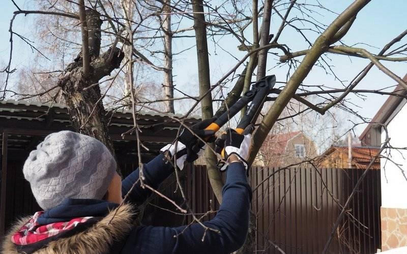Дачные и садовые работы в феврале. полезные советы от опытного садовода. первостепенные работы в феврале в саду и огороде