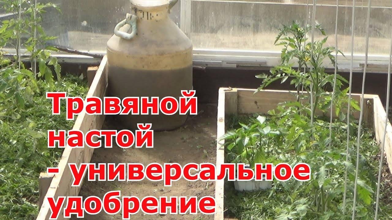 Травяные закваски для подкормки растений