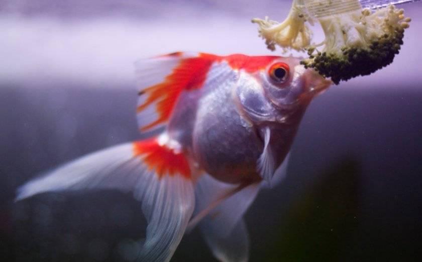 Живой корм для аквариумных рыбок: виды, разведение в домашних условиях
