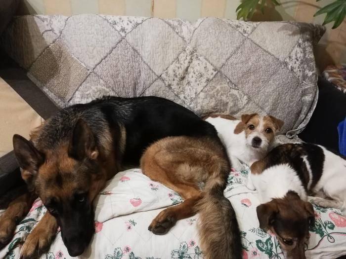 Вольер для собаки: фото, видео, рекомендации как сделать своими руками