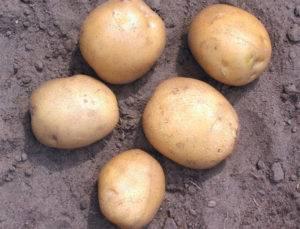 Лучшее удобрение для картофеля при посадке в лунку на 2020 год