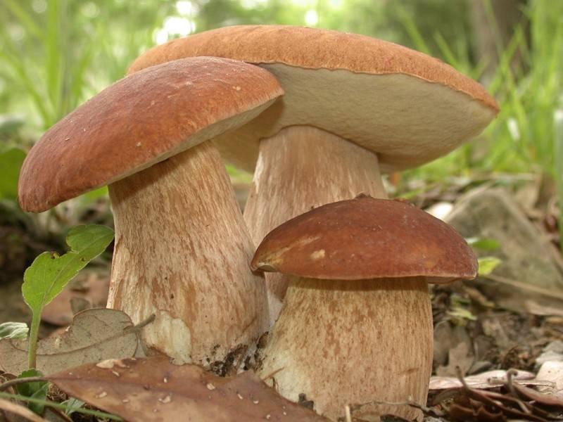 Как правильно собирать грибы: секреты и правила