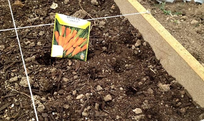 Необычные способы посева семян моркови без дальнейшего прореживания