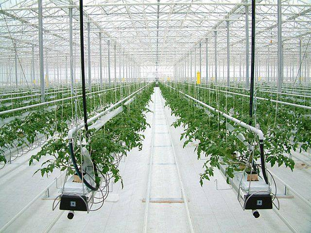 Правильная гидропоника для огурцов и томатов своими руками