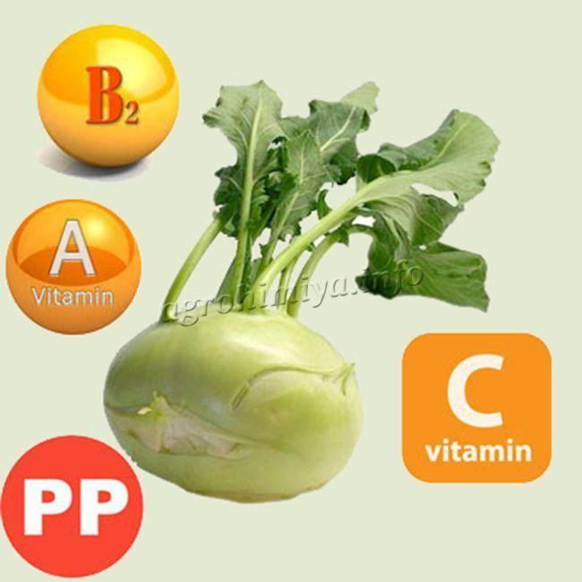 Все о капусте кольраби: полезные свойства и противопоказания
