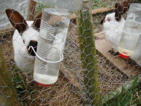 Лечение инфекций кролей препаратом соликокс: инструкция по применению