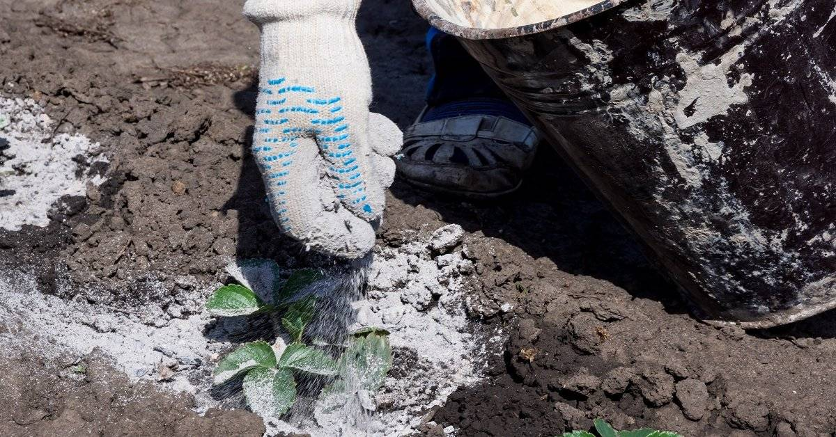 Удобрение для чеснока в летний период — зола древесная