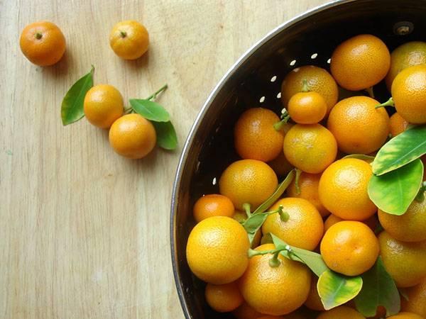 Цитрофуртунелла или каламондин: уход в домашних условиях за тропическим растением с яркими оранжевыми плодами