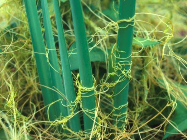 Сорняки на огороде и в саду, методы и способы борьбы