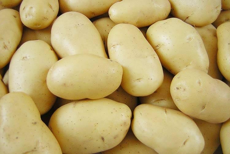 Как посадить картошку второй раз за лето и получить отличный урожай
