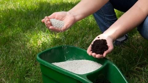 Чем подкормить газонную траву, какие удобрения использовать?