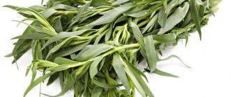 Как применять драконью траву тархун (эстрагон) в кулинарии— секреты шеф-повара
