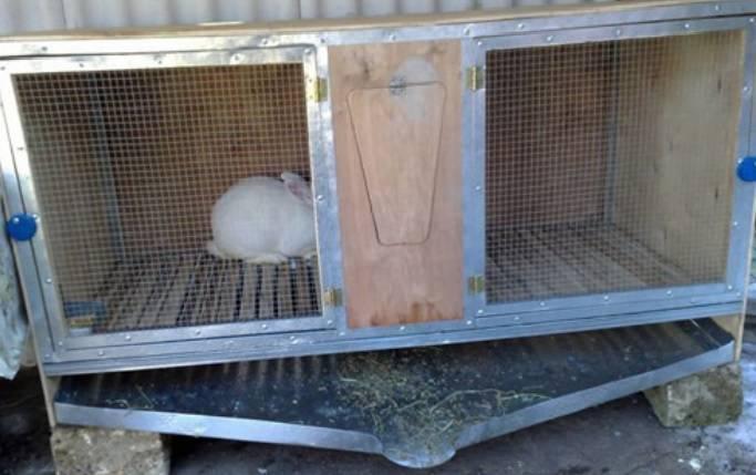 Кролики — разведение и содержание в домашних условиях в клетке