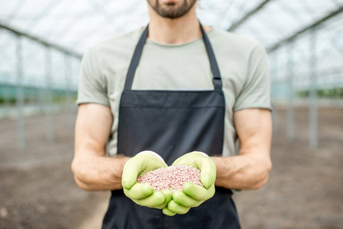 Как применять удобрение азофоску для картофеля: принцип действия, нормы внесения