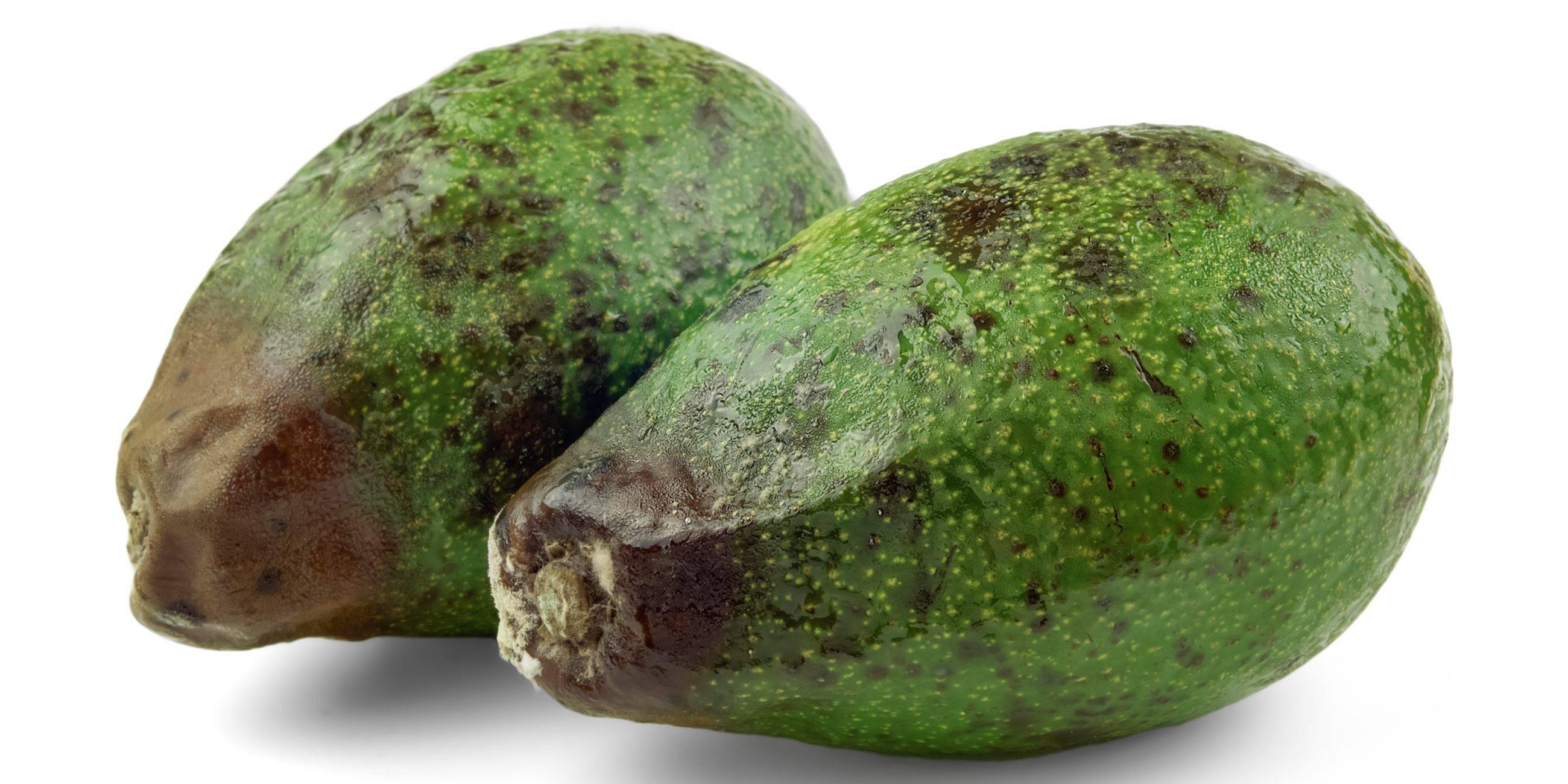 Как правильно выбирать и есть авокадо?