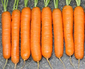 Морковь посадка и уход в открытом грунте, особенности выращивания