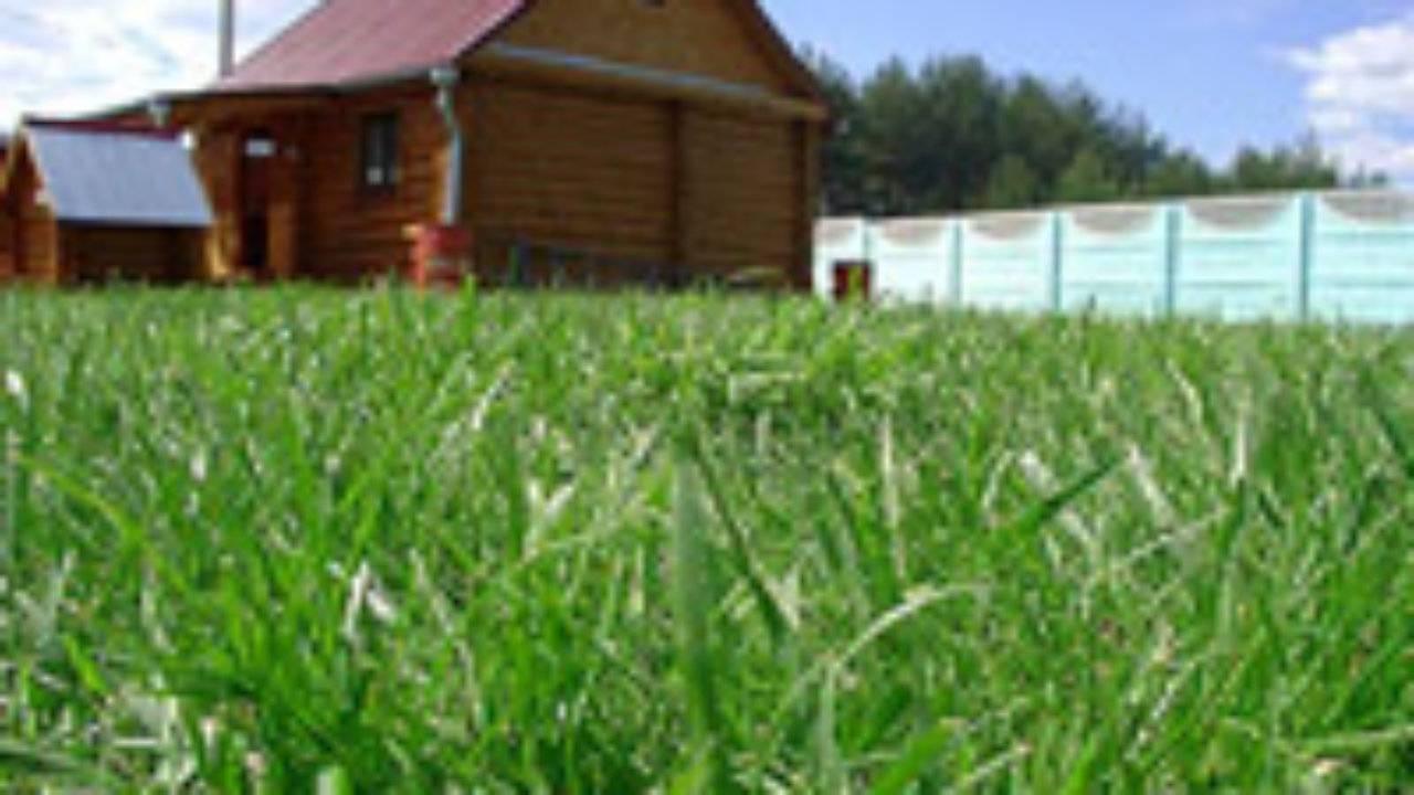 Как ухаживать весной за газоном. посадка газона весной