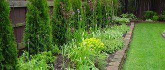 Когда лучше сажать топинамбур и как правильно это делать. рекомендации по выращиванию земляной груши