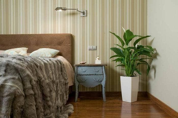 Какие комнатные растения лучше держать в спальне