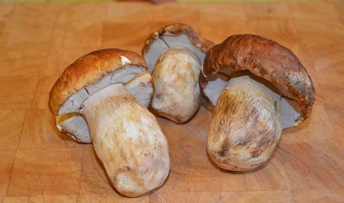 Закуска из грибов на зиму