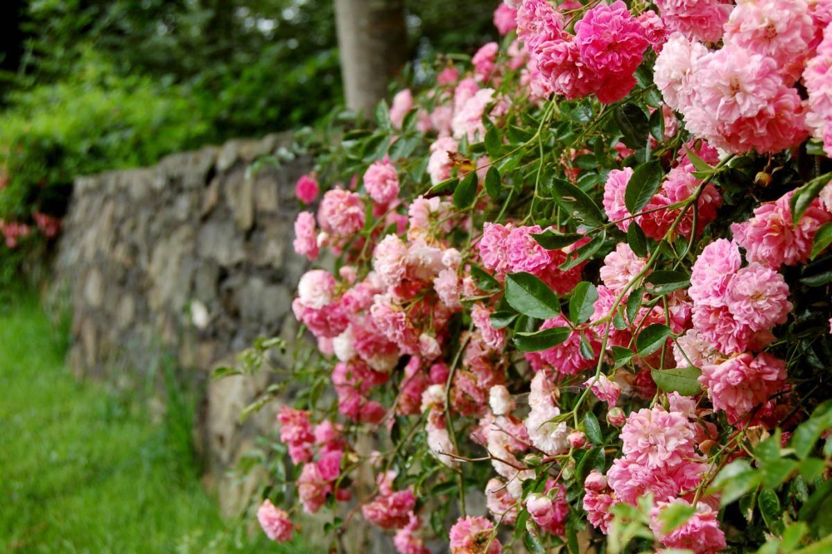 Лунный посевной календарь на июнь 2020 для садовода, огородника и цветовода